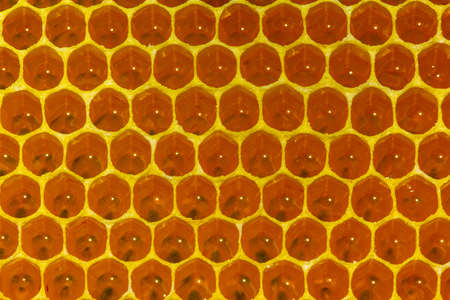 Nectar in new comb. Bees nectar poured into new comb to convert it into honey.