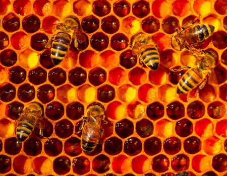 Bee puts the pollen collected from the flowers into honeycomb. Pollen is food for bees.