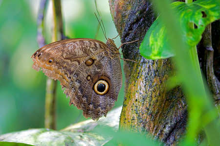 butterfly with an owl on the wings