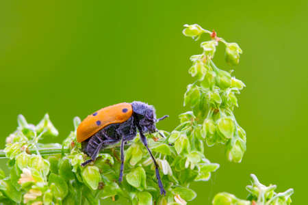 A insects named beetle