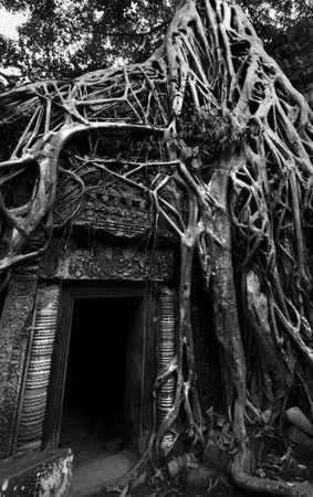 raider: Ta Prom Tomb raider temple at Angkor Wat. Cambodia.