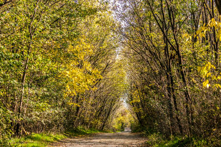 road autumnal: Autumnal forest with yellow leaves with a sand road Stock Photo