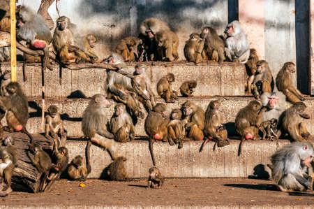 primates: Various kinds of primates Several types of primates, from babies to adult members Stock Photo