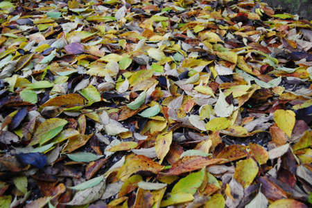 Autumn leaves Stock Photo - 11446881