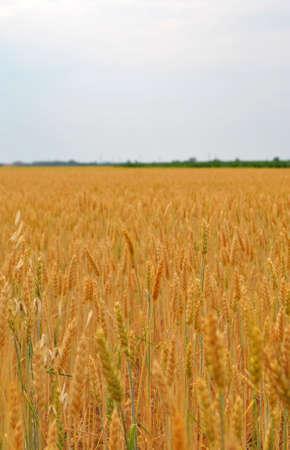 Field photo