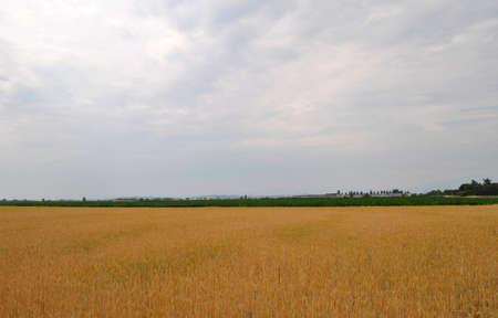 Field Stock Photo - 11621252