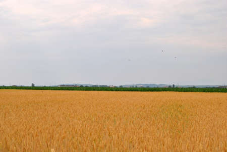 Field Stock Photo - 11621256