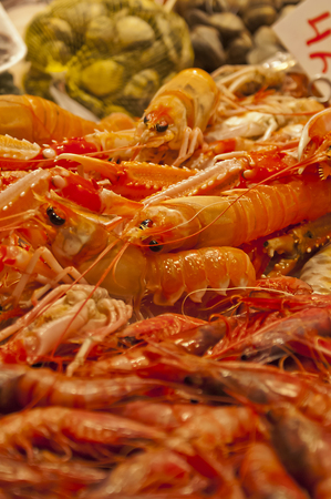Fresh crawfish in a market stall with prawns on the front and clams on the back shallow deep of field Stock Photo