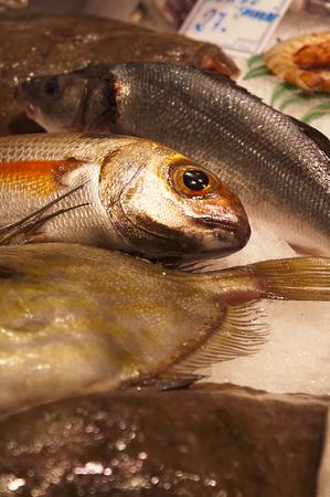 visboer: Close-up van verse vis op een visboer kraam in een overdekte markt Stockfoto