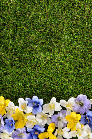 flower bed: Spring or summer border background with grass and flowers.  Space for copy.