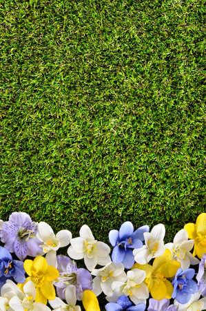 flower border: Spring flower border background, grass copy space