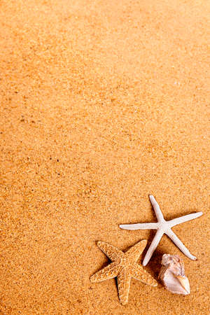 beach holiday: Tropical summer beach background starfish seashell copy space Stock Photo