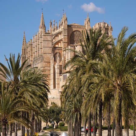 Palma de Mallorca, Spain - March 24, 2019 : end view of the famous gothic cathedral Santa Maria La Seu with palm tree garden in the foreground