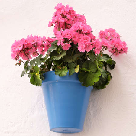 Andalucia Spain traditional whitewashed village flower pot wall display