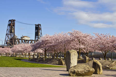 Cherry Blossom Blooming at Spring Time Portland Oregon Stock Photo - 6590092