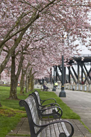 Enjoying spring time at waterfront park on a bench photo
