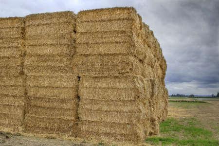 Square Bales of Hay on Farmland on Oregon Stock Photo - 7990185