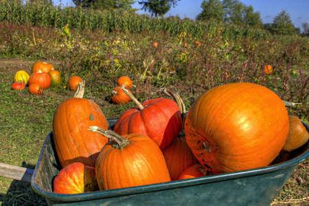 carretilla: Calabazas en carretillas en la granja de Oreg�n de revisi�n de calabaza