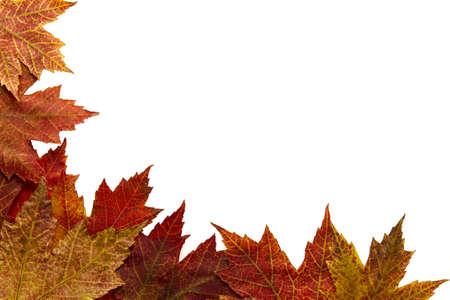 crimson colour: Red Autumn Maple Leaves Border on White Background