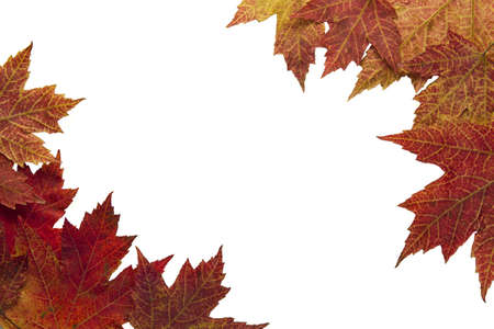 Red Autumn Maple Leaves Background in the Fall Border 2 Stock Photo - 8098513