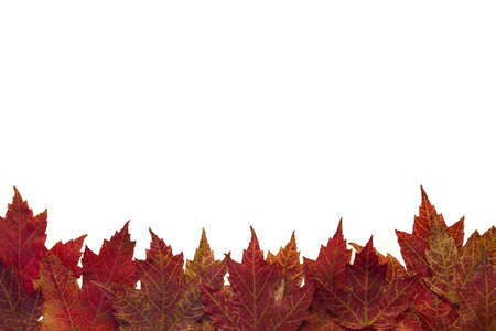 Red Autumn Maple Leaves Background in the Fall Border 3 Stock Photo - 8098511