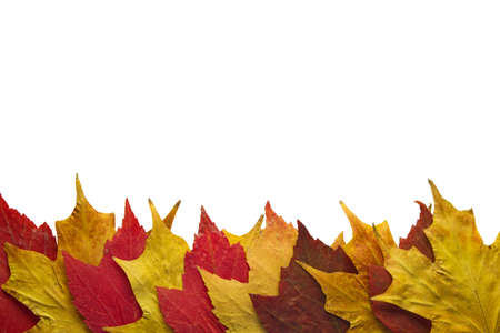 Red and Yellow Maple Fall Leaves Background Border Stock Photo - 8098512