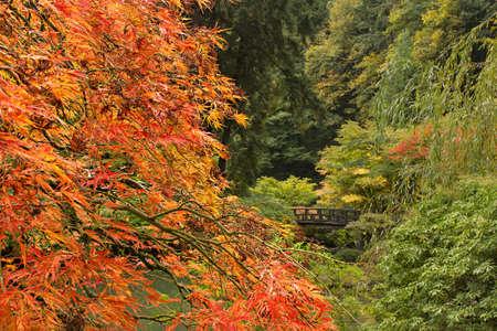 Fall Season at Portland Japanese Garden in Oregon photo