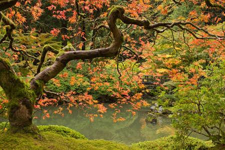 Fall Season at Portland Japanese Garden in Oregon 2 photo