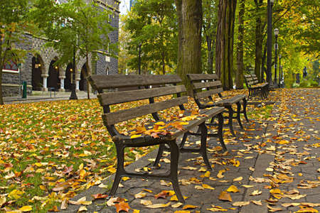 Maple and Elm Tree Fall Leaves on Park Benches 3 photo