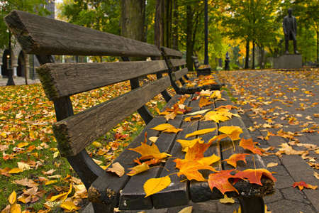 Maple and Elm Tree Fall Leaves on Park Benches photo