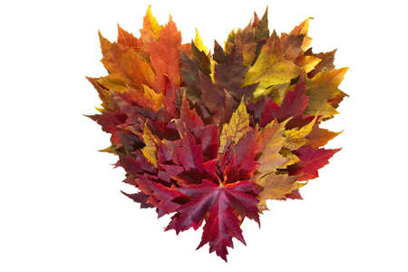 changing color: Maple Leaves Mixed Fall Colors Autumn Heart Wreath on White Background Stock Photo