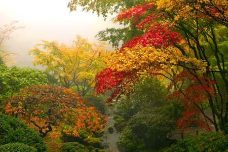 Maple bomen in de herfst op Portland Japanse tuin een mistige ochtend