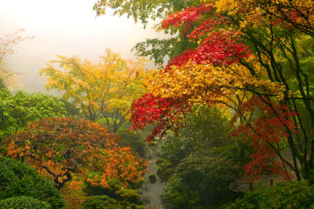 Maple Trees in the Fall at Portland Japanese Garden One Foggy Morning Stock Photo - 8152693