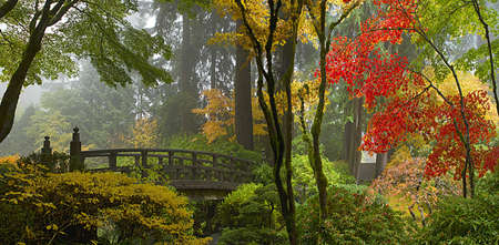 Wooden Bridge at Portland Japanese Garden in Fall One Foggy Morning Panorama Stock Photo