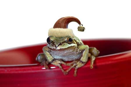 christmas frog: ChristmasTree Chorus Frog with Red Hat Sitting on Red Mug
