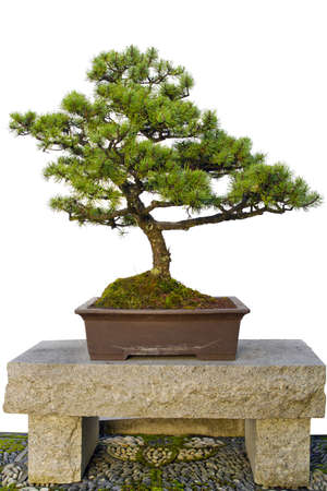 Bonsai Miniature Tree Sitting on Granite Stone Bench in Chinese Garden photo