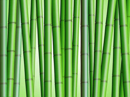 Bamboebos Achtergrond 2 Illustratie Stockfoto