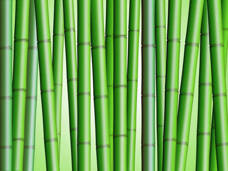 Bamboo Forest Background 2 Illustration Stock Photo