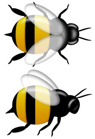 Bumble Bee boven- en zijaanzicht illustratie geïsoleerd op witte achtergrond Stockfoto