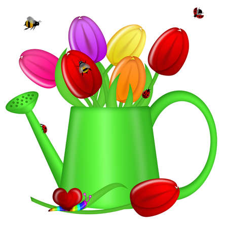 Watering Can with Spring Tulip Flowers Illustration Stock Photo