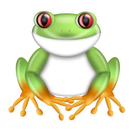 agalychnis: Red-Eyed Green Tree Frog Agalychnis callidryas from Costa Rica Illustration Stock Photo