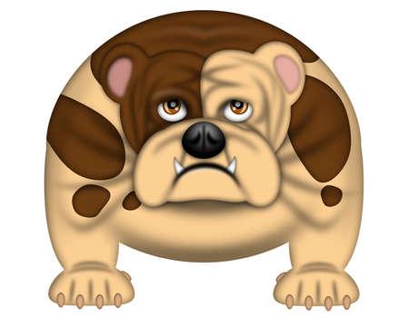 show dog: English Bull Dog Isolated on White Illustration