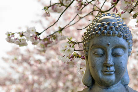 Zen Buddha Meditating by Cherry Blossoms Trees Blurred Background Stock Photo