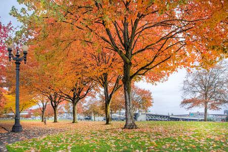 changing color: Cambio del color de los �rboles de arce en Portland Downtown Waterfront Park, en la temporada de oto�o