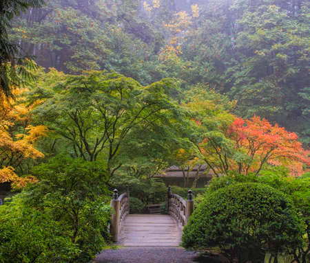 japanese maples: Foggy Morning in Japanese Garden with Wooden Foot Bridge during Fall Season