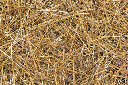 feed: Wheat Grass Hay havested during fall season for cow feed background Stock Photo