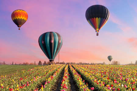 united states: Hot Air Balloons taking off at tulip fields at tulip festival in Woodburn Oregon during sunrise
