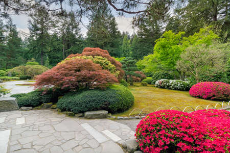 manicured: Flowers in bloom at Portland Japanese Garden in Springtime