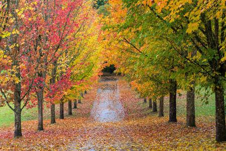 オレゴン州の遊歩道にカエデの木の秋の色