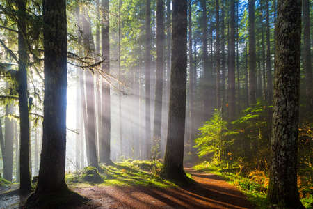 Sunbeams at Lower Lewis River Falls Hiking Trails in Washington State 스톡 콘텐츠
